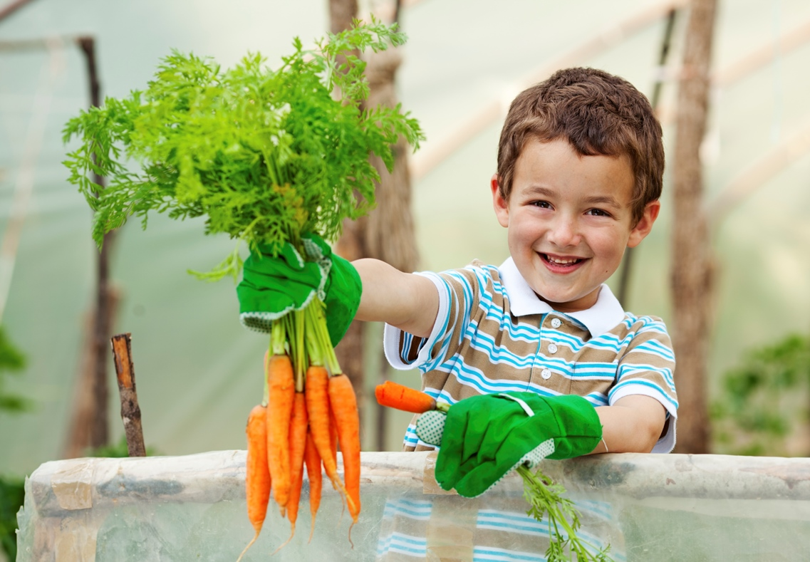 Little Boy Holding Carrots